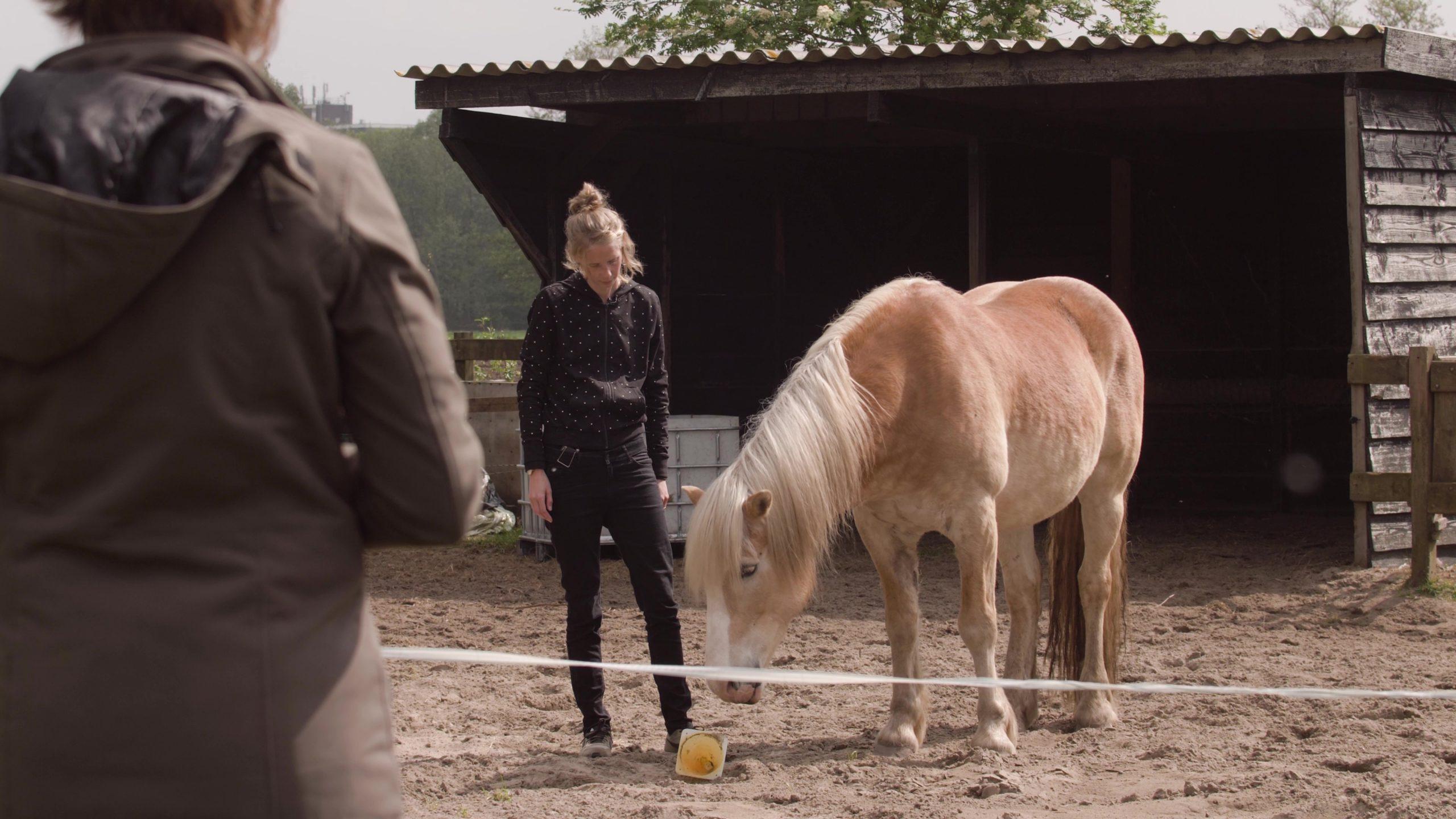 Hoe dieren helpen